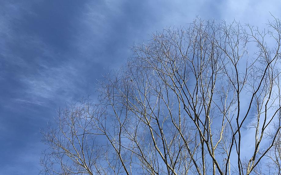 冬の青空の写真