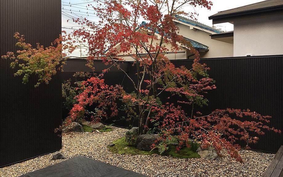 中庭の紅葉の紅葉写真