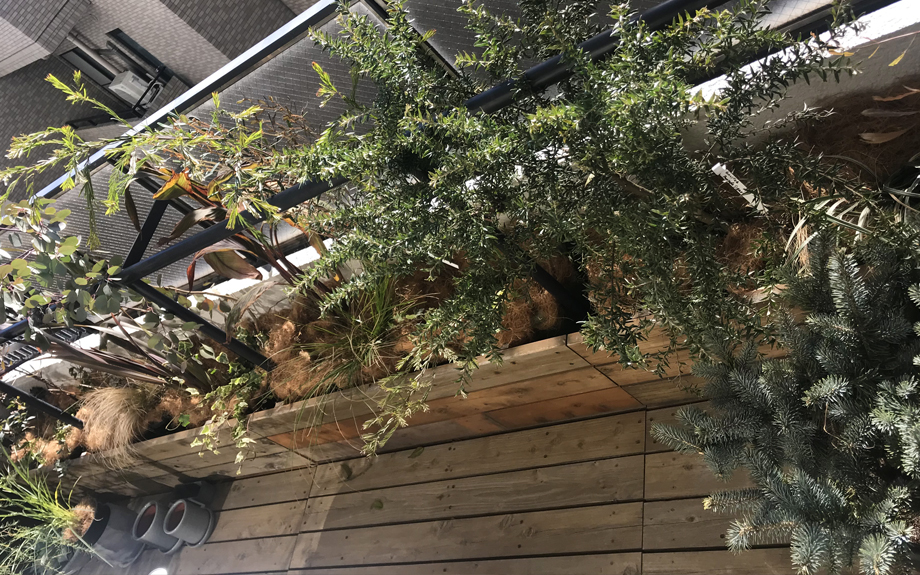 テラスの植物写真
