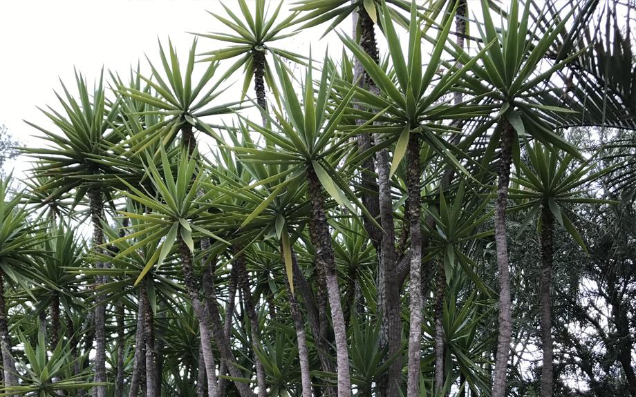 plant-171201-2