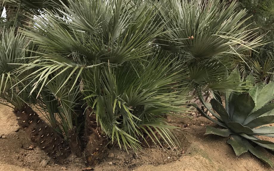 plant-171201-3