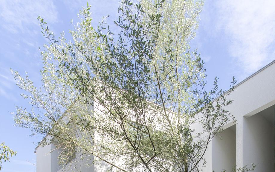 大阪市内の集合住宅 植栽の写真