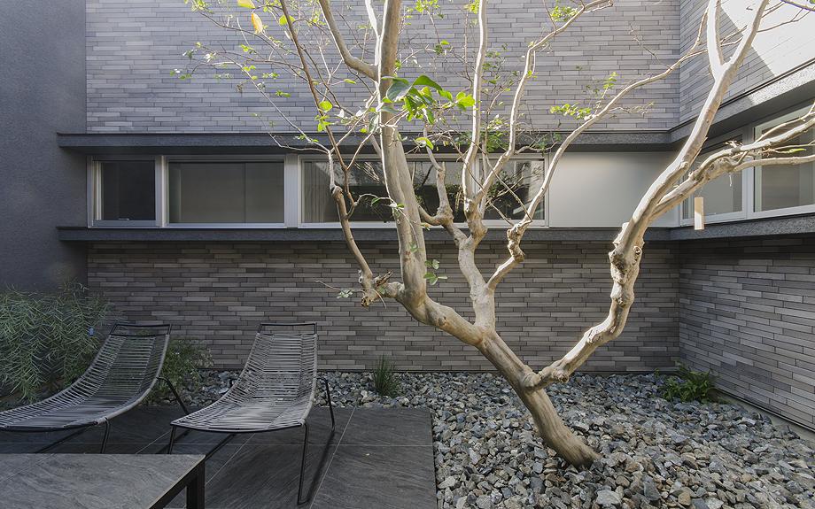 モダン な中庭の植栽実例写真